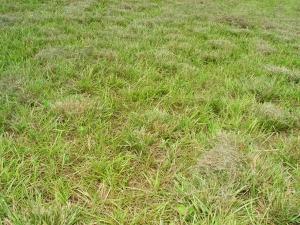grass-1-1391232