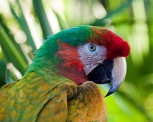 stockvault-macaw137674