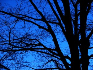 stockvault-bare-trees--night103029