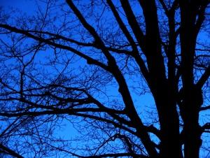 stockvault-bare-trees--night103029