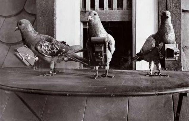 800px-pigeoncameras1