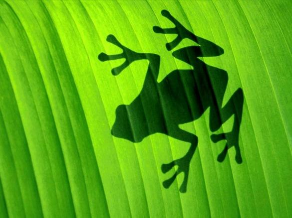 frog-shadow-1360285