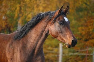 horse-1024745_1920