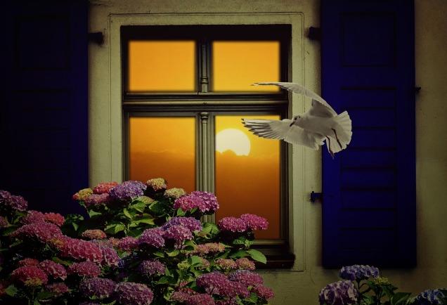 window-1843473_1920
