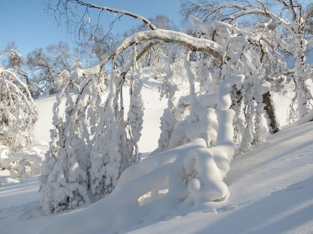 winter-2643901_1920