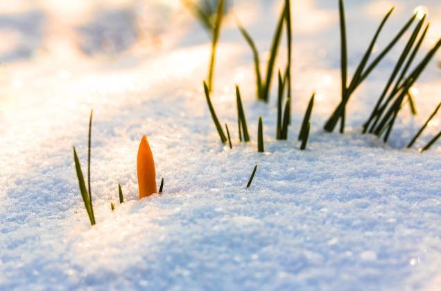 spring-awakening-3132154_1920