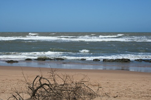 dead-branches-on-beach-2098383_1920