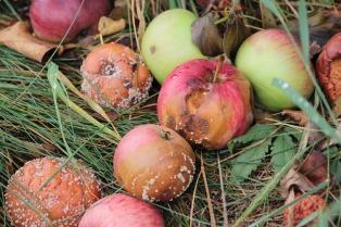 apple-3663552_1920