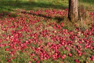 apple-3684775_1920