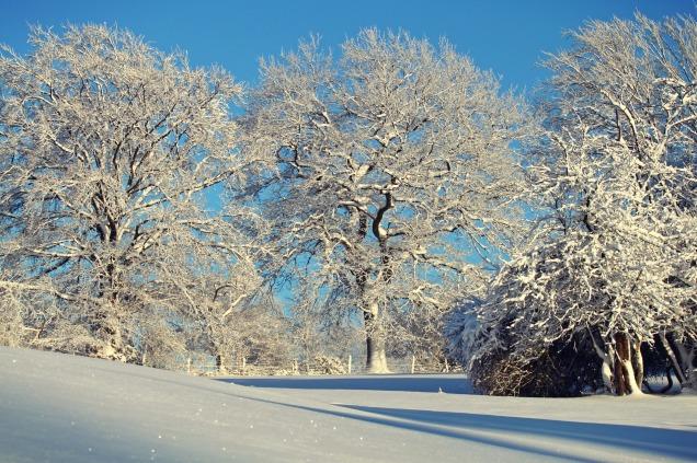 winter-1861695_1920
