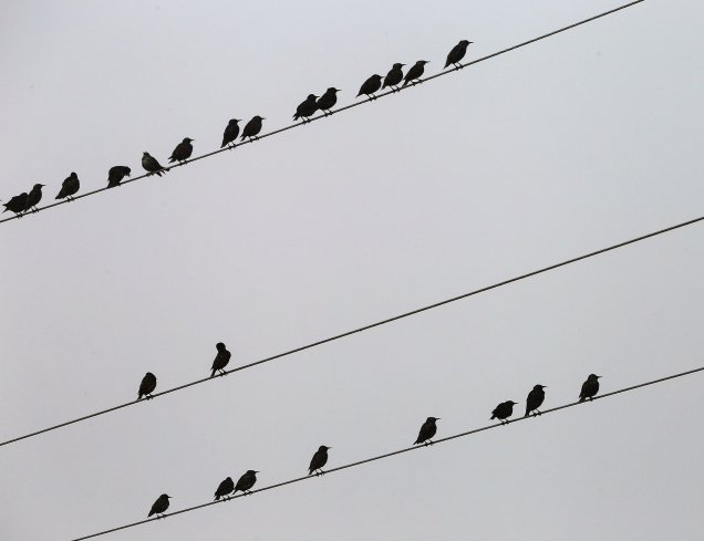 birds-on-electric-wires-3744908_1920