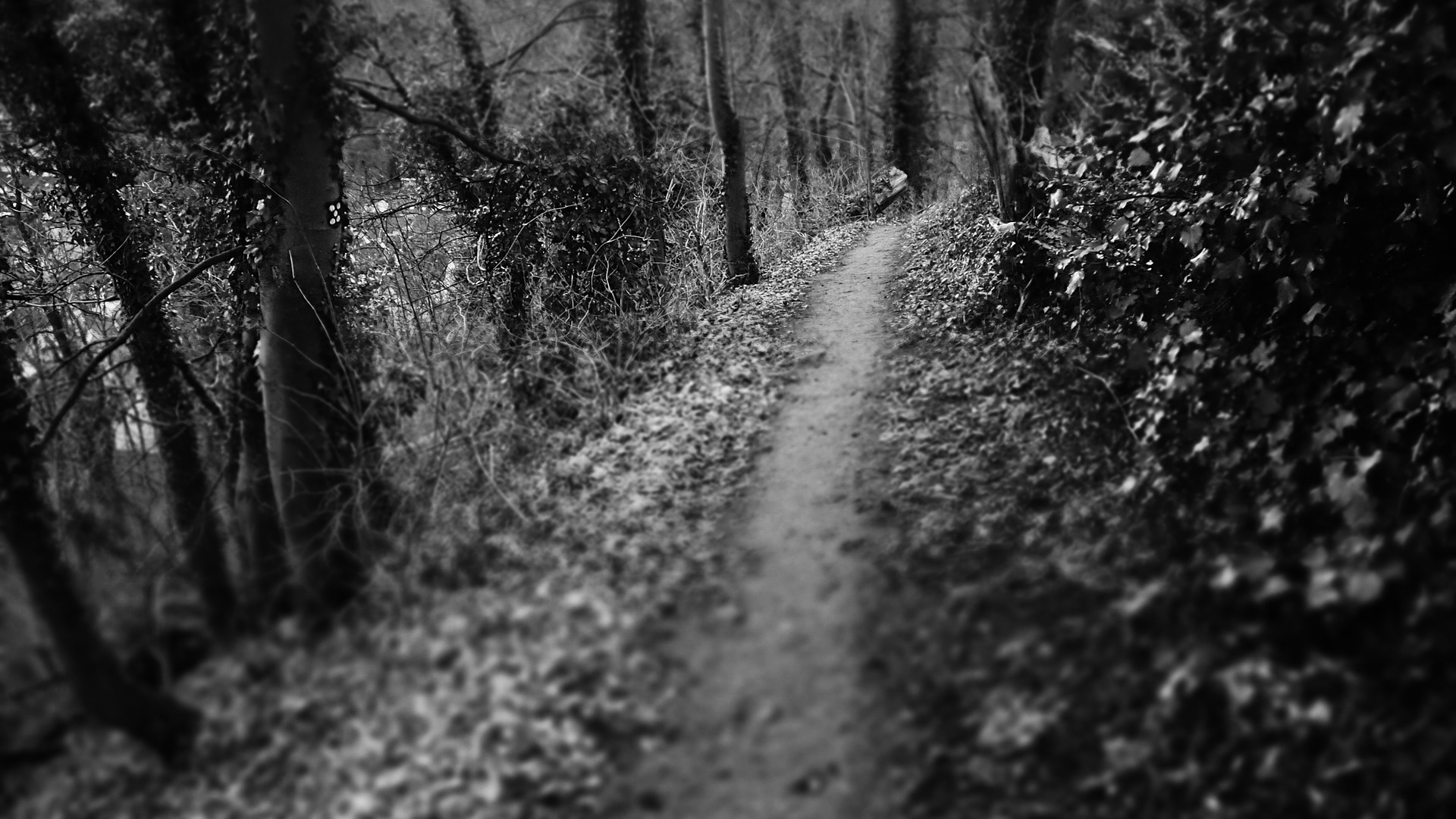 dark-path-1303697_1920
