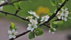 blooms-4882981_1920