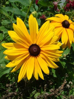 flower-557399_1920